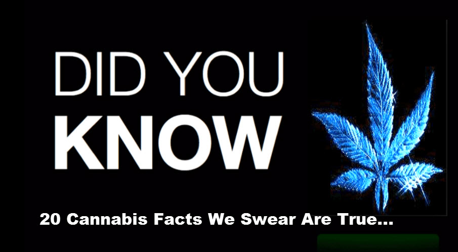 20 Cannabis Facts We Swear Are True