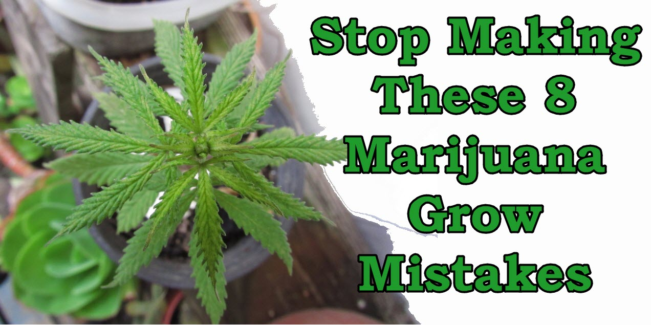 Stop making these 8 marijuana grow mistakes cannabis 4 healing to save you time and energy weve compiled a list of common mistakes people make when they start growing nvjuhfo Image collections