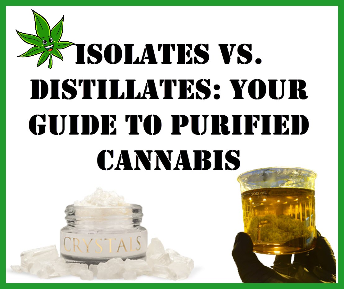 Isolates vs  Distillates: Your Guide To Purified Cannabis