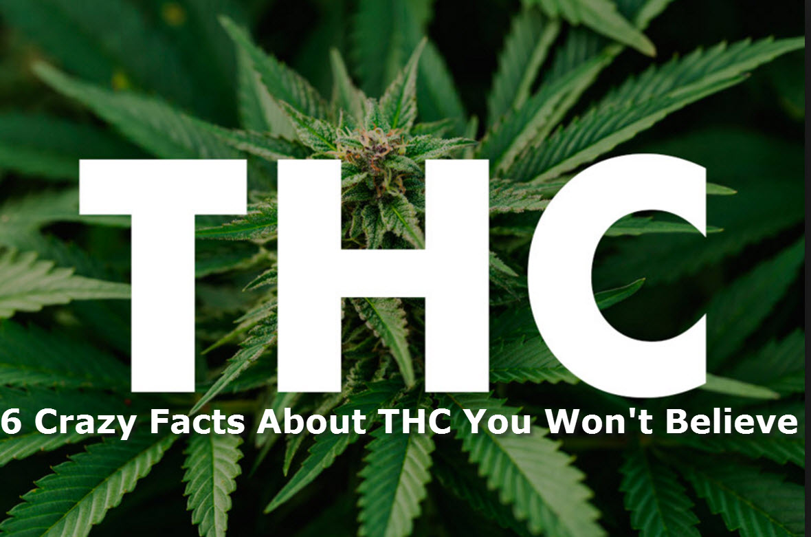 6 Fun Facts About THC, Everyone's Favorite Cannabinoid