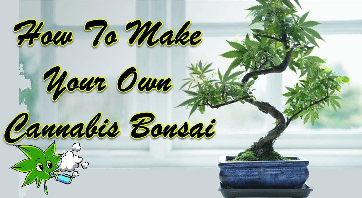 How To Make Your Own Cannabis Bonsai
