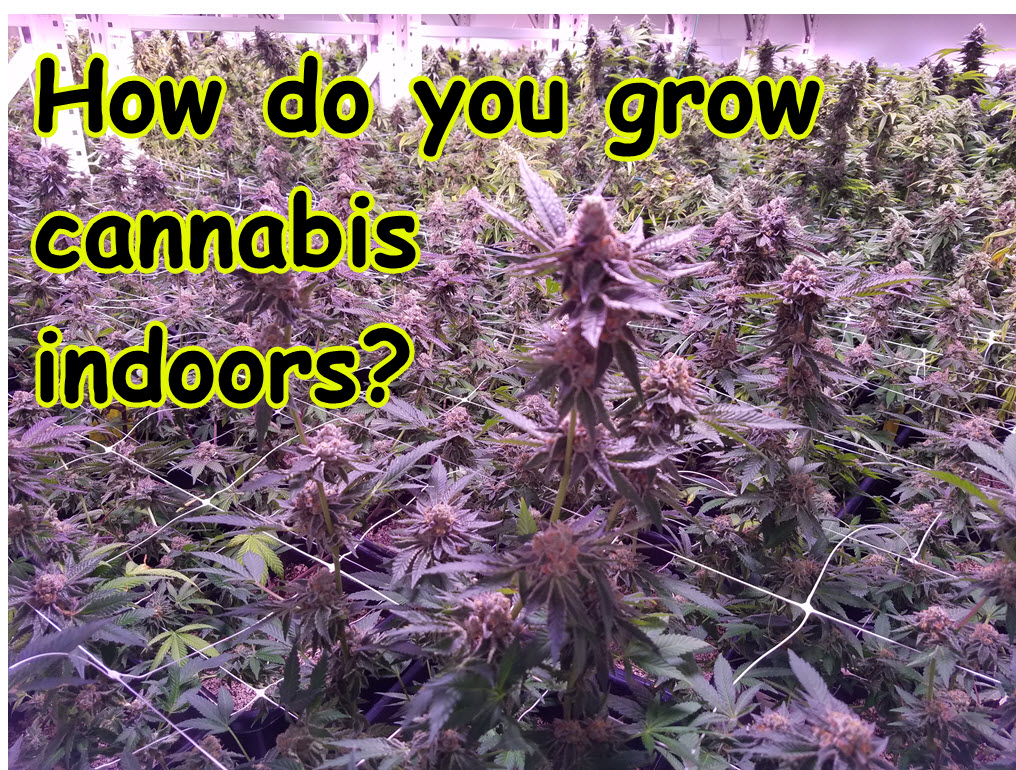 how to grow marijuana at home indoors