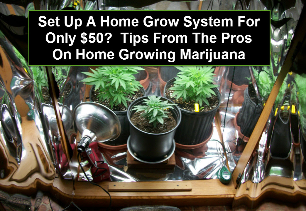 Growing Marijuana At Home For Only 50