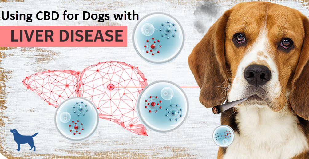 How Can CBD Help Treat Liver Issues in Dogs?