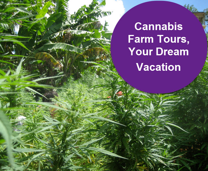 Cannibus Farm Tours Jamaica