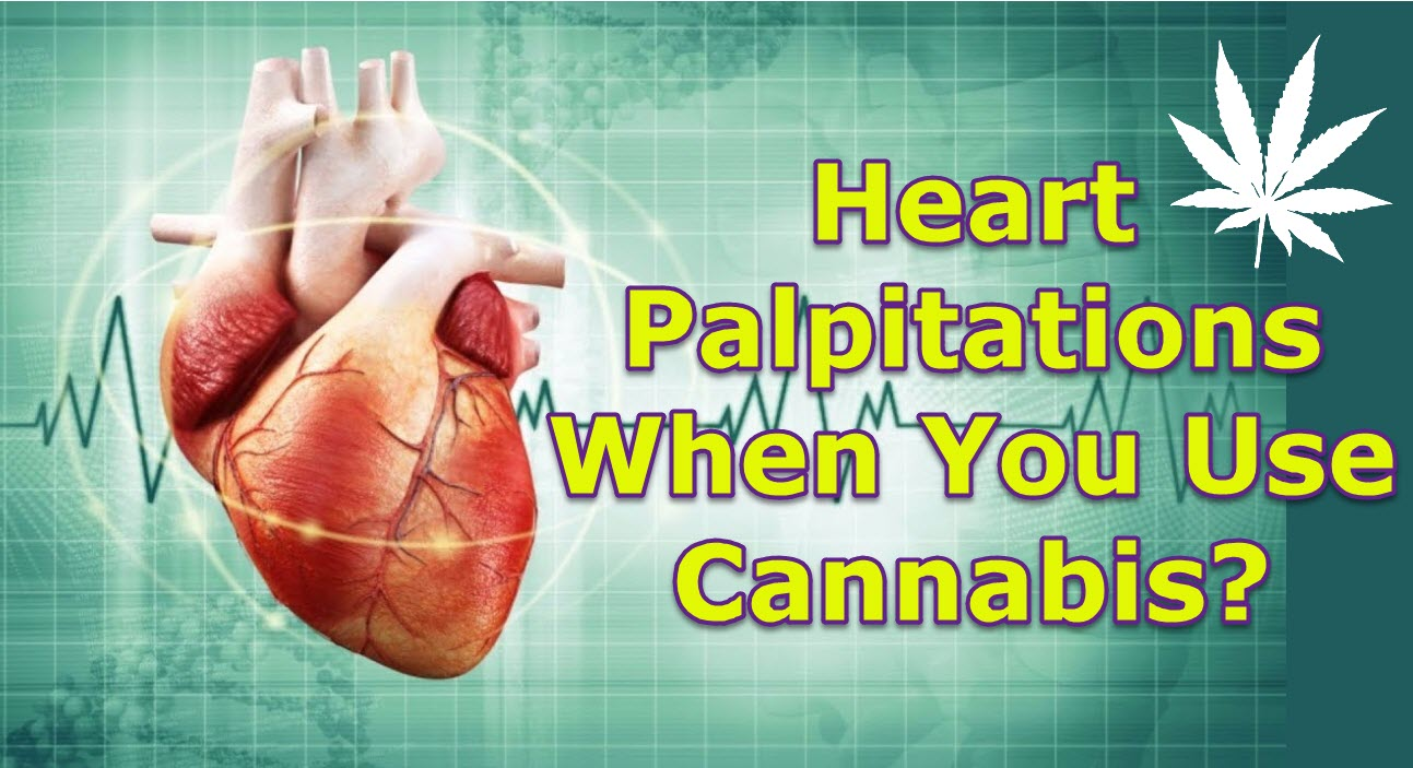 Heart Palpitations When You Use Cannabis? Here's Why