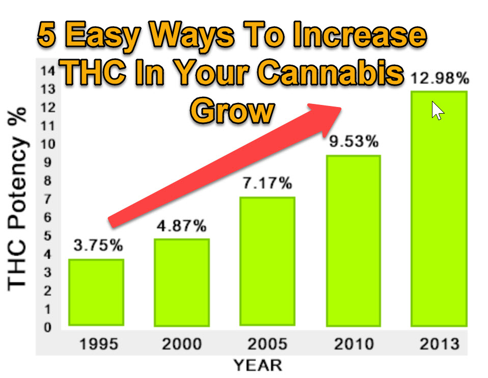 5 easy ways to increase thc in your cannabis grow