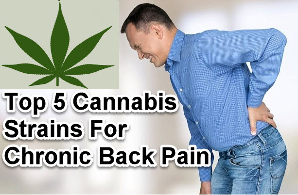 The Top 5 Strains For Chronic Back Pain