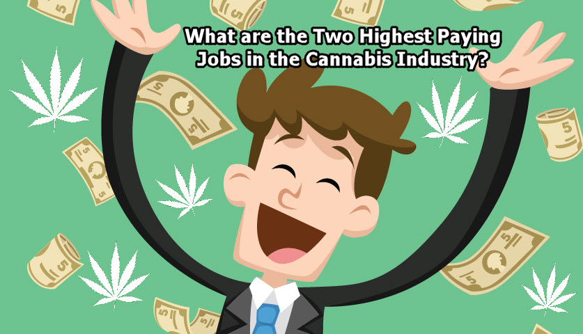 What are the Two Highest Paying Jobs in the Cannabis Industry?