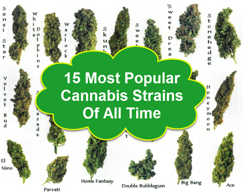 15 Most Popular Cannabis Strains Of All Time