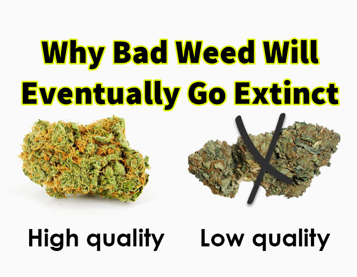is weed as bad as they At worst, most marijuana smokers can expect chronic inflammation of the upper airways, called bronchitis weed increases the risk of heart attack of stroke recently, researchers showed that using marijuana was associated with an increased risk for hypertension mortality, which, in normal human.