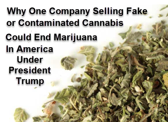 Why One Company Selling Fake or Contaminated Cannabis Could End Marijuana In America