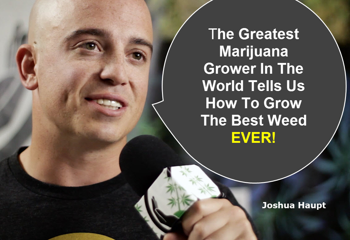 Secrets From The Greatest Marijuana Grower Ever Recorded