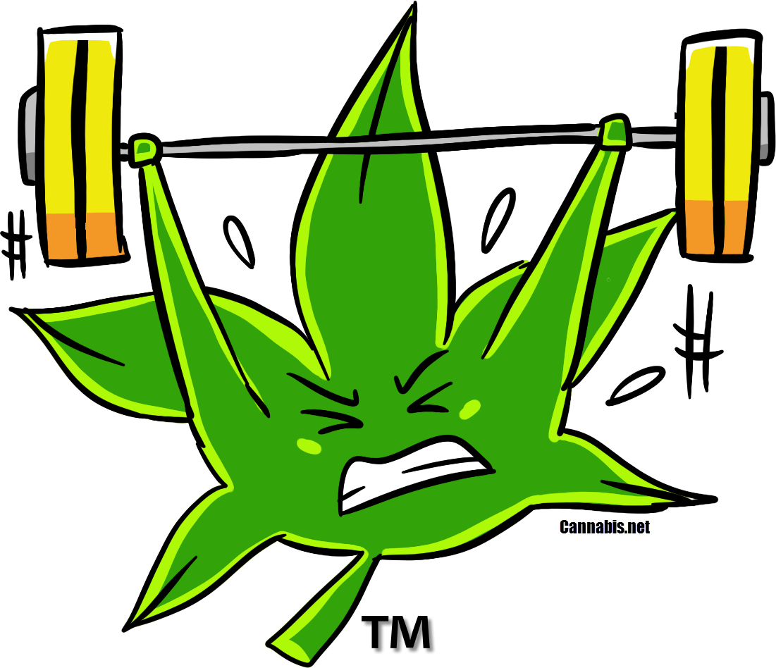 3 Reasons To Add Weed To Your Gym Workout