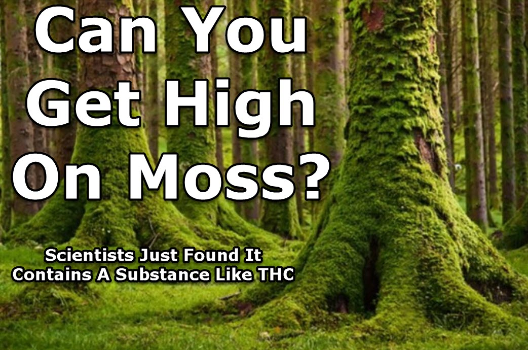 Can You Get High On Moss? Scientists Just Found It Contains