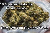 10 Greatest Cannabis Hybrid Strains Of All Time?