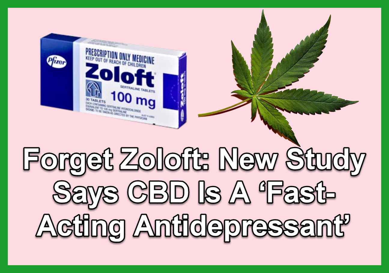 Forget Zoloft: New Study Says CBD Is A 'Fast-Acting