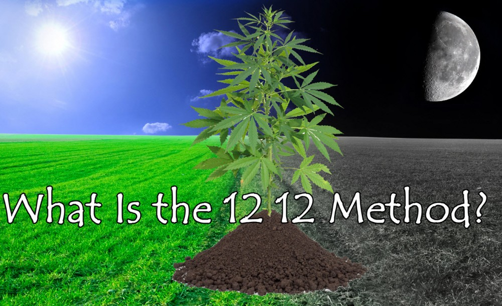 Cannabis and Moon Gardening - The Cultivation Technique of the Future?