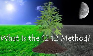 12 12 GROWING TECHNIQUE