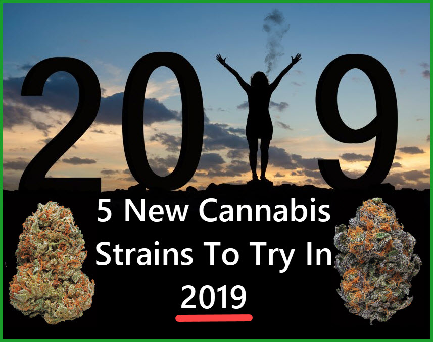 NEW CANNABIS STRAINS OF 2019