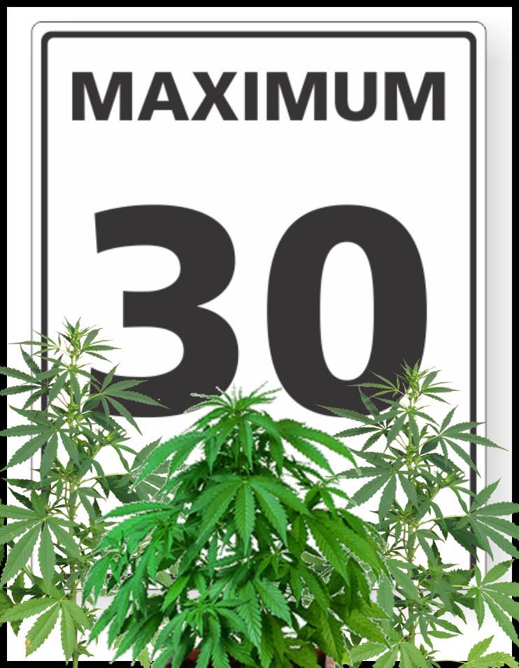 30 pot plant for back pain
