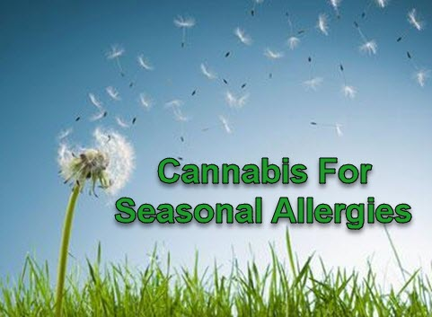 CANNABIS FOR ALLERGIES