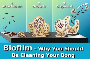 BIOFILM AND BONG WATER