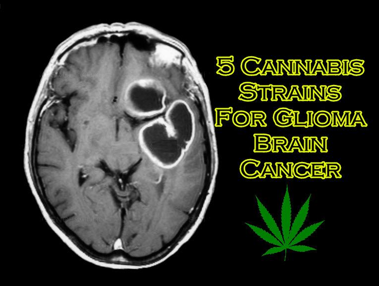 cannabis strains for brain cancer