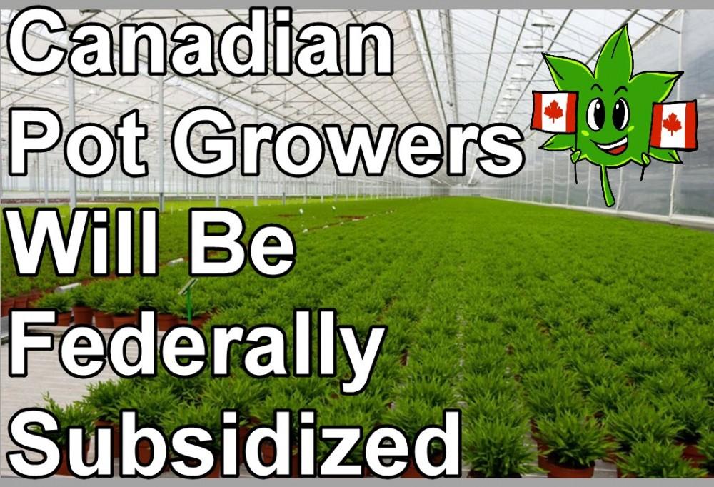 CANADIAN CANNABIS SUBSIDY