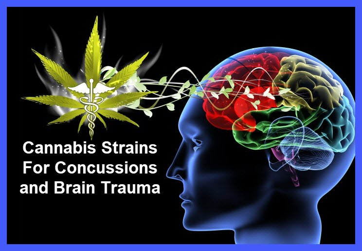 marijuana strains for concussions