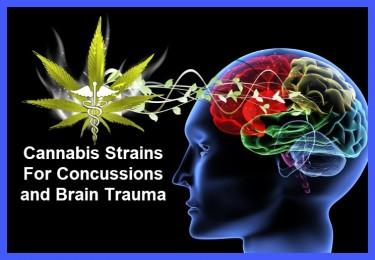 CANNABIS STRAINS FOR CONCUSSION SYMPTOMS