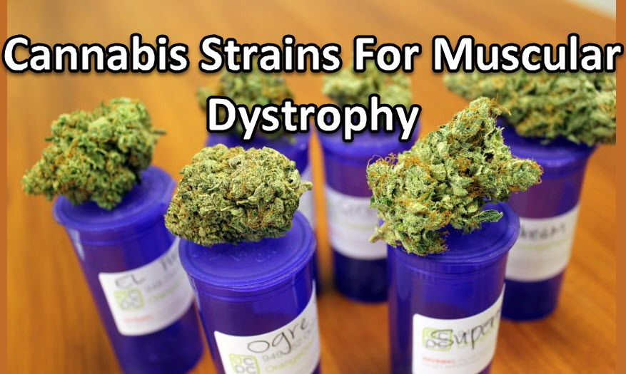 cannabis strain for muscular dystrophy