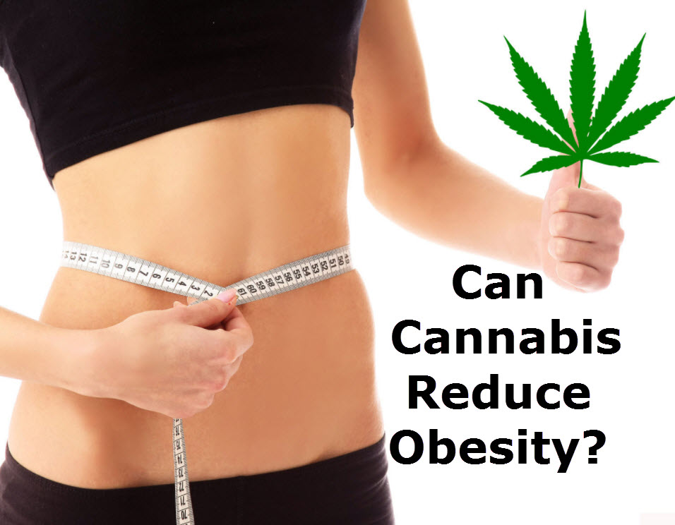 CANNABIS FOR OBESITY