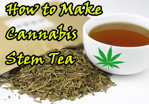CANNABIS STEM TEA