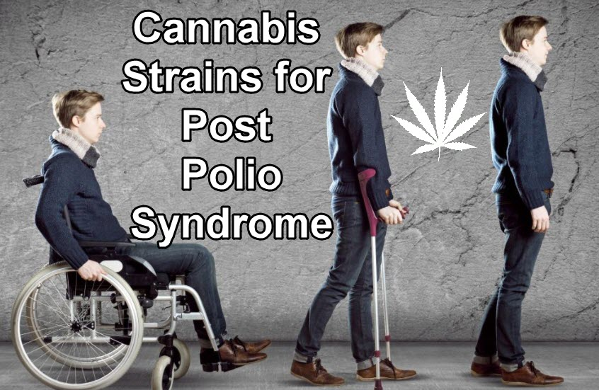 CANNABIS FOR POLIO SYNDROME