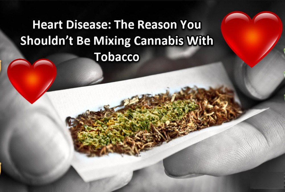 TOBACCO HEART DISEASE CANNABIS