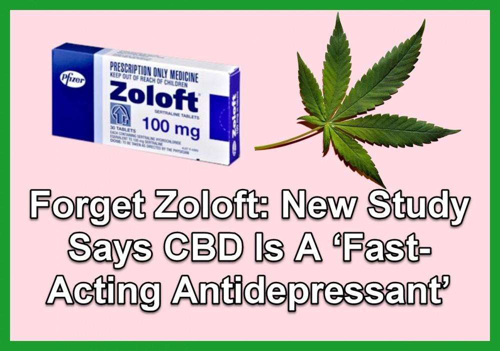 CBD FOR ZOLOFT
