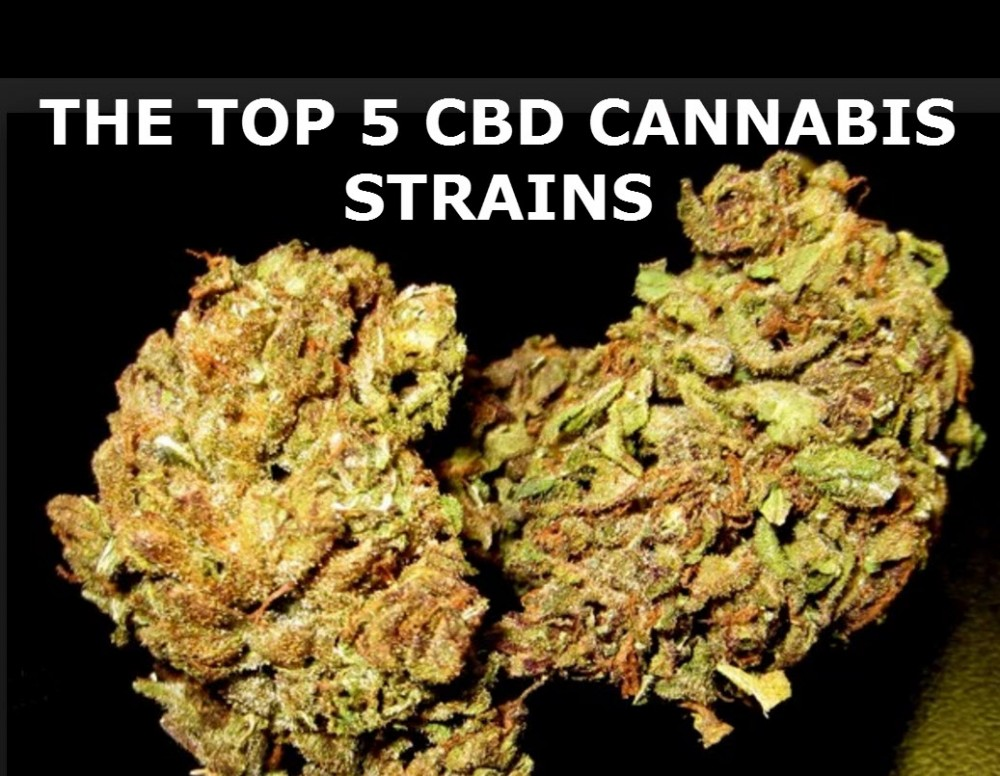 TOP CBD STRAINS