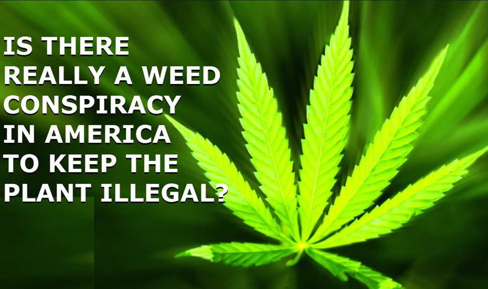 CANNABIS CONSPIRACY IN AMERICA