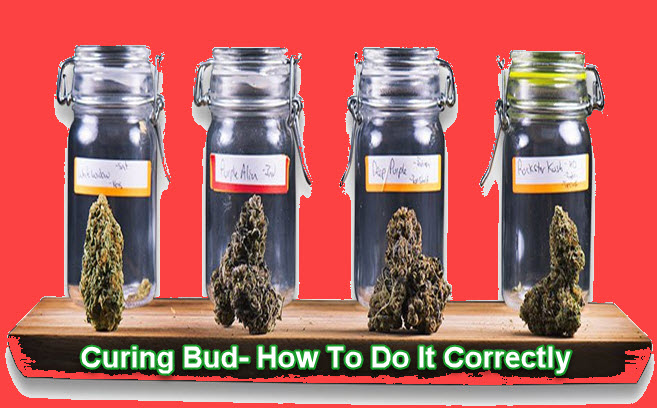 CURING CANNABIS CORRECTLY