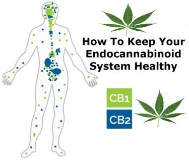 HEALTHY ENDOCANNABINOID SYSTEMS