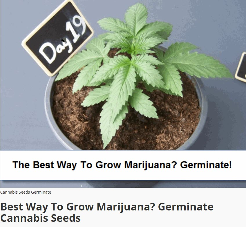 GERMINATE MARIJUANA SEEDS TO GROW