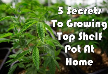 GROWING WEED AT HOME