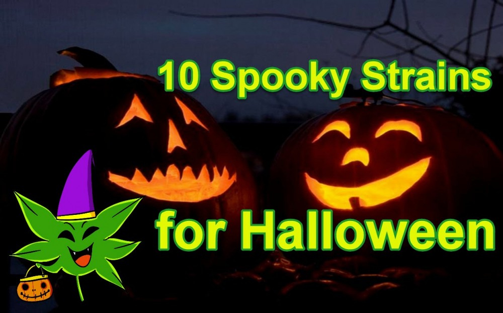HALLOWEEN CANNABIS STRAINS
