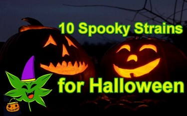 HALLOWEEN STRAINS OF CANNABIS