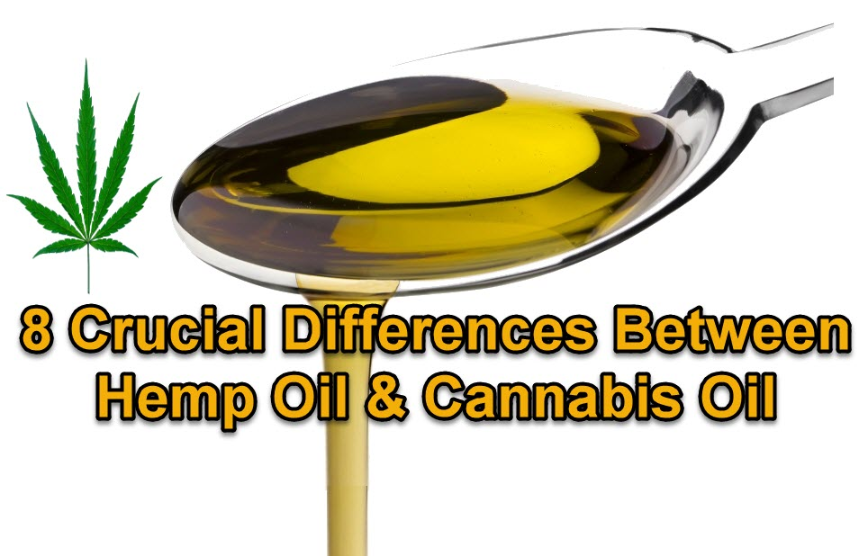 hemp oil or cannabis oil