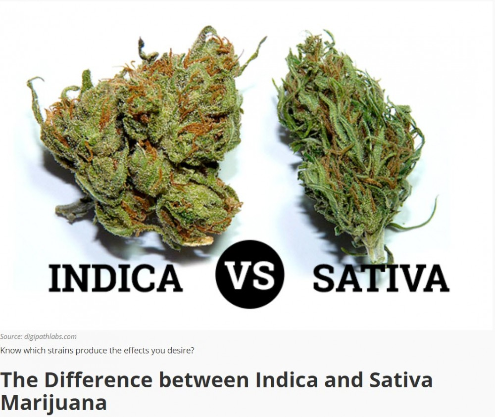 WHAT IS THE DIFFERENCE BETWEEN SATIVA AND INDICA