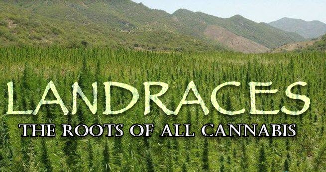 where can you find landrace strains