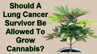 LUNG CANCER PATIENTS GROIWNG MARIJUANA