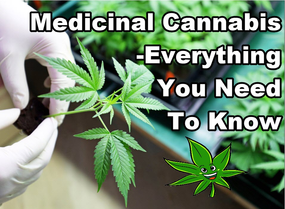 THE GUIDE TO MEDICAL CANNABIS MARIJUANA